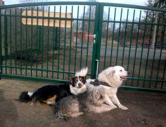 Tor drei Hunde
