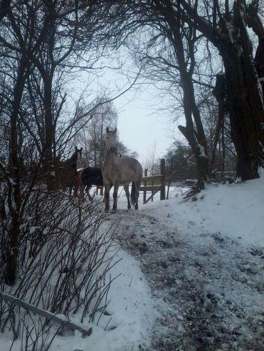 Lavtru im Schnee