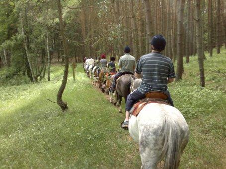 Gruppe Wald von hinten