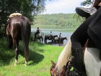 blick auf pferde am see