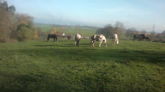 Pferde Sonne Weide
