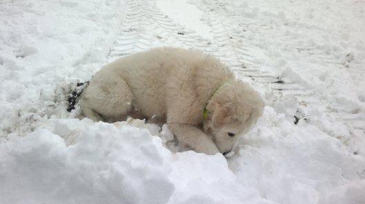 fast ein Eisbär