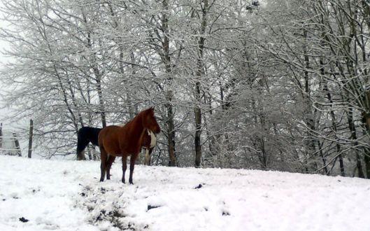 Ponchito Winter