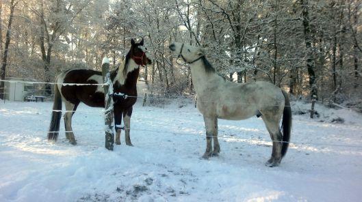 Zwei im Schnee